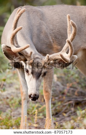 Significant Factors In Section Of Deers Antler - For Adults