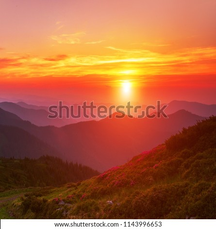 majestic summer dawn image, amazing sunrise scenery, fantastic blooming rhododendron pink flowers on background  sky, colorful floral morning landscape in the mountains, Carpathians, Ukraine, Europe #1143996653