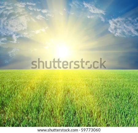 majestic sun rising among a green fields