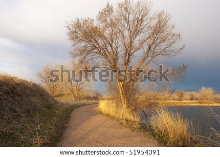 Majestic tree towers above a quiet path by a lake on the Colorado prairie soaked in early morning golden sunlight.