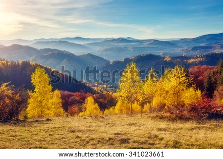 Majestic trees with sunny beams at mountain valley. Dramatic and picturesque morning scene. Red and yellow leaves. Warm toning effect. Carpathians, Sokilsky ridge. Ukraine, Europe. Beauty world. #341023661