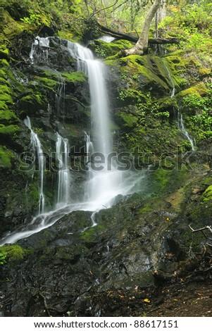 Majestic waterfall in the lush rainforest of Uvas Canyon, California
