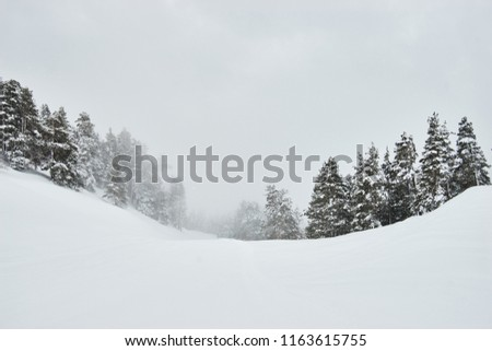 Majestic white spruces glowing by sunlight. Picturesque and gorgeous wintry scene. #1163615755