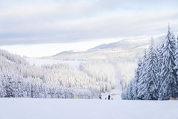 Majestic white spruces. Picturesque and gorgeous wintery scene. Location place Carpathian national park, Europe. Alps ski resort. Beauty world. the skiers. ski slides