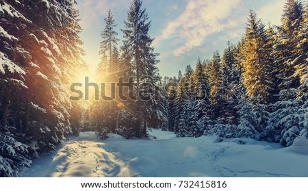 Majestic winter landscape. frosty pine tree under sunlight at sunset. christmas holiday concept, unusual wonderful landscape. fantastic wintry background. instagram effect. retro style