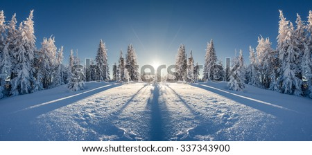 Majestic winter landscape glowing by sunlight in the morning. Clear blue sky. Dramatic and picturesque wintry scene. Location  Carpathian, Ukraine, Europe. Double exposure effect. Beauty world.