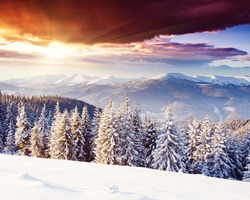 Majestic winter landscape glowing by sunlight in the morning. Dramatic wintry scene. Location Carpathian, Ukraine, Europe. Beauty world. Happy New Year!