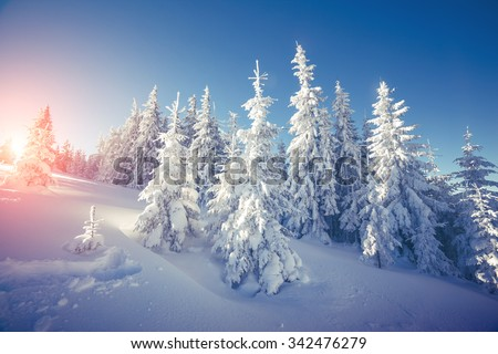 Majestic winter landscape glowing by sunlight in the morning. Dramatic wintry scene. Location Carpathian, Ukraine, Europe. Beauty world. Retro and vintage style, soft filter. Instagram toning effect. #342476279