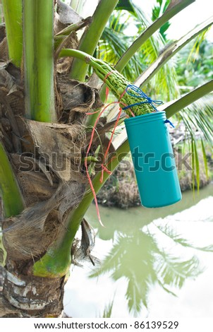 make coconut sugar from coconut tree at Thailand