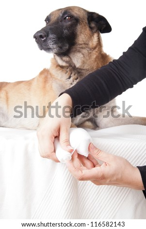 Making a paw bandage. First aid on a dog.