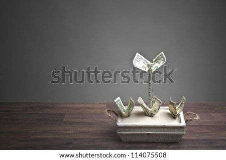Making money - money-plants in a flowerpot