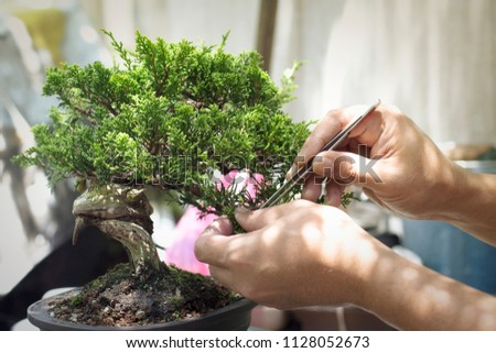 Making of bonsai trees. Handmade accessories wire and scissor bonsai, bonsai tools, stand of bonsai. Photo stock ©