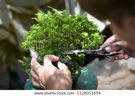 Making of bonsai trees. Handmade accessories wire and scissor bonsai, bonsai tools, stand of bonsai.