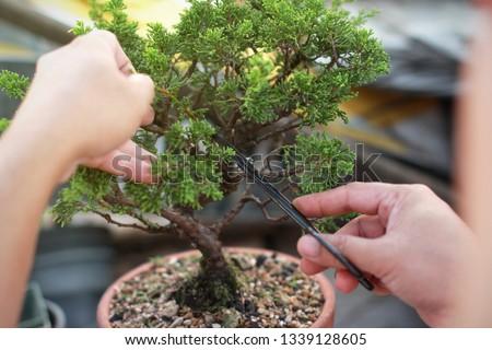 Making of bonsai trees. Handmade accessories wire and scissor bonsai, bonsai tools, stand of bonsai. Сток-фото ©