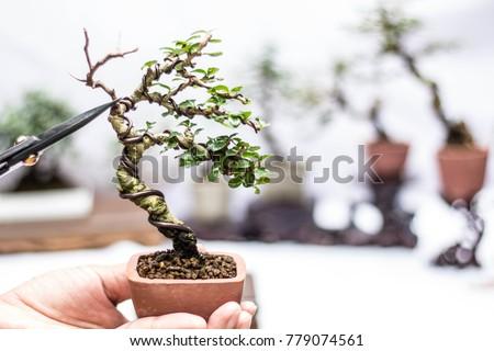 Making of bonsai trees. Handmade accessories wire and scrissor bonsai, bonsai tools, stand of bonsai