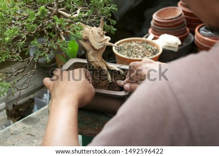 Making of bonsai trees, Wiring a tree into the pot. Handmade accessories wire and scissor bonsai tools, stand of bonsai, Concept Bonsai. Сток-фото ©