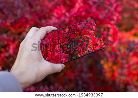 Making picture on mobile smart phone Red autumn leaves in the pa
