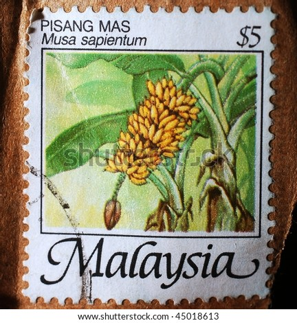 MALAYSIA - CIRCA 1995: A stamp printed in Malaysia shows image of the banana plant (Musa sapientum), circa 1995