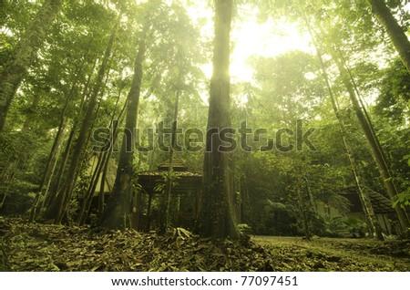 malaysian tropical rainforest