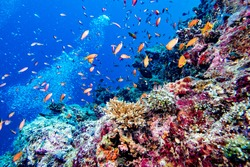 Maldives corals house for Fishes underwater landscape