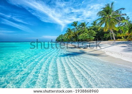 Maldives Islands Ocean Tropical Beach Photo stock ©