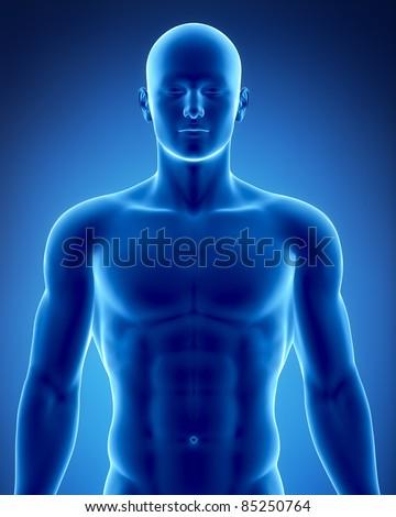 Male anatomy - stock photo