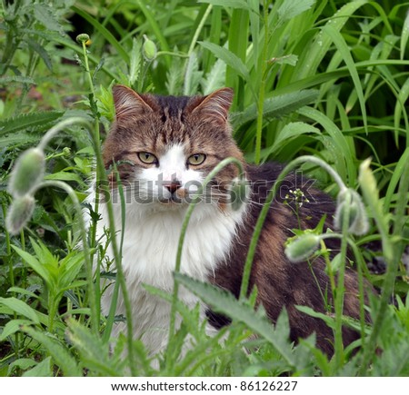 Male Calico cat sitting very still among tall flowers  and weeds thinking that he is invisible.