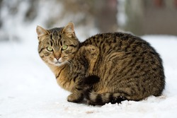 male cat sits in the snow
