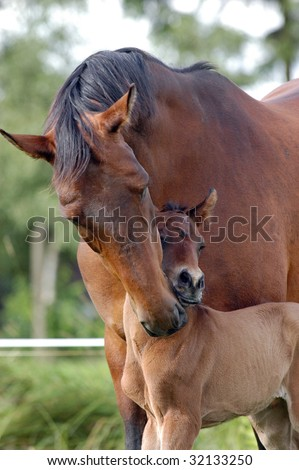 Male cleaning her foal