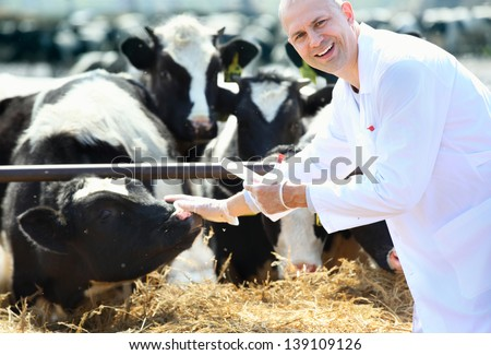 male cow veterinarian at the farm takes analyzes
