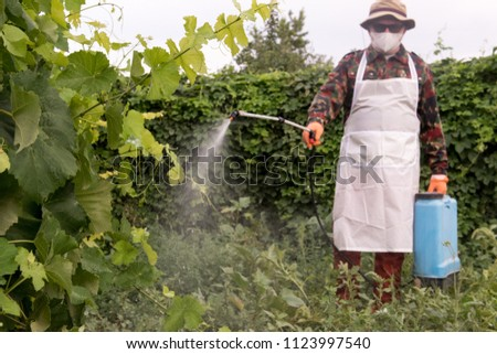 Male farmer with hat, glasses, respirator, apron, protective clothing watering grapes with professional sprayer. Fighting pests in garden. Blue reservoir with electric sprayer. Poison for insects