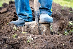 Male feet wearing rubber boots digging the ground in the garden bed with an old shovel or spade in the summer garden close up. Concept of a garden work. Gardening equipment and a tool. Front view