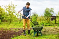 Male gardener is filling wheelbarrow with green grass using shovel at spring garden background.