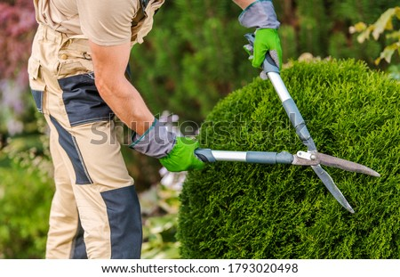Male Gardener Pruning Decorative Bushes With Trimming Shears In Private Yard.  Stockfoto ©