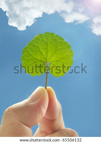 Male hand holding a leaf against clear blue sky