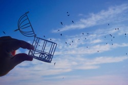 male hand holding  bird cage on  blue sky with cloud background, idea concept of freedom. open cover. concept being set free with birds flying out of a cage held by a person