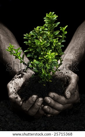 Male hands holding a small tree. Hands are dirty.