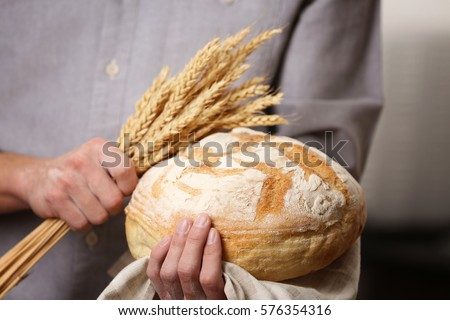 Male hands holding freshly baked wheaten bread and wheat ears, closeup