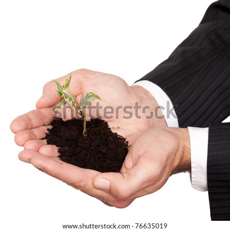 male hands in a business suit holding little tree isolated on white