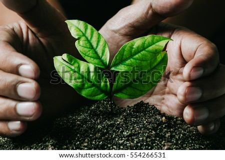 male hands transplanting young...