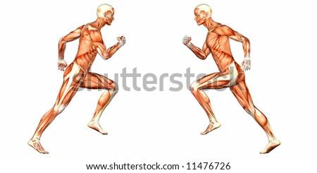 Male Human Body Anatomy