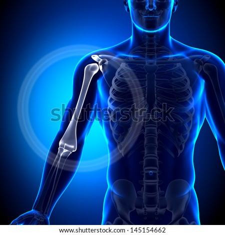 Male Humerus / Arm Anatomy - Anatomy Bones