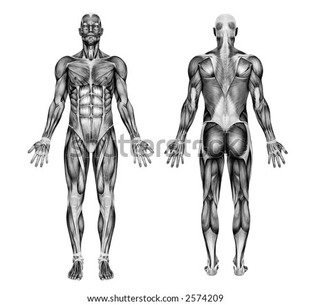 Male Muscles - Pencil Drawing Style - 3D render - special shaders were used during the rendering process to create the appearance of a pencil drawing.