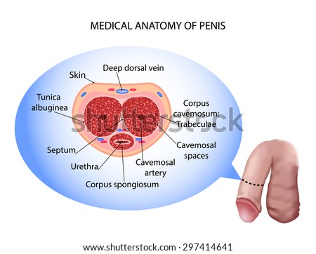 Pic Of Male Penis 41