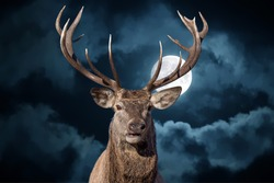 male red Deer portrait looking at you close up portrait on full moon black background