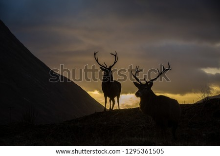 Male stags standing, silhouetted against a sunset sky, horizontal format #1295361505
