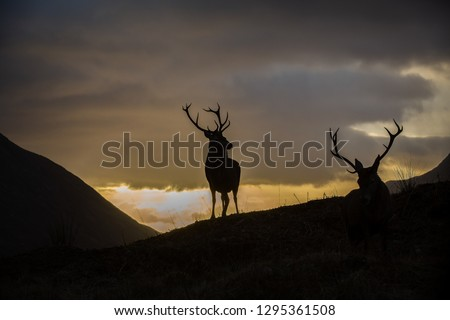 Male stags standing, silhouetted against a sunset sky, horizontal format #1295361508