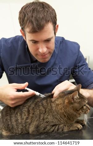 Male Veterinary Surgeon Examining Cat In Surgery