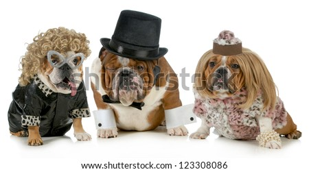 males bulldog with two females all dressed in formal clothing isolated on white background