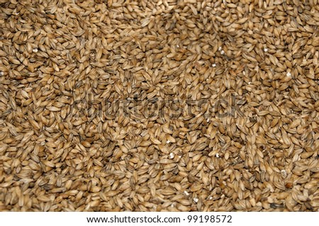 Malt seeds